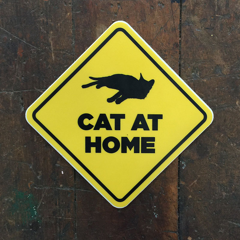 cat-at-home.jpg