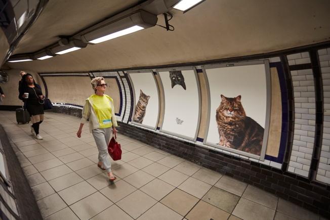 catsface1.jpg